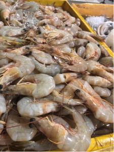 Fresh Prawn suppliers in Klang Valley